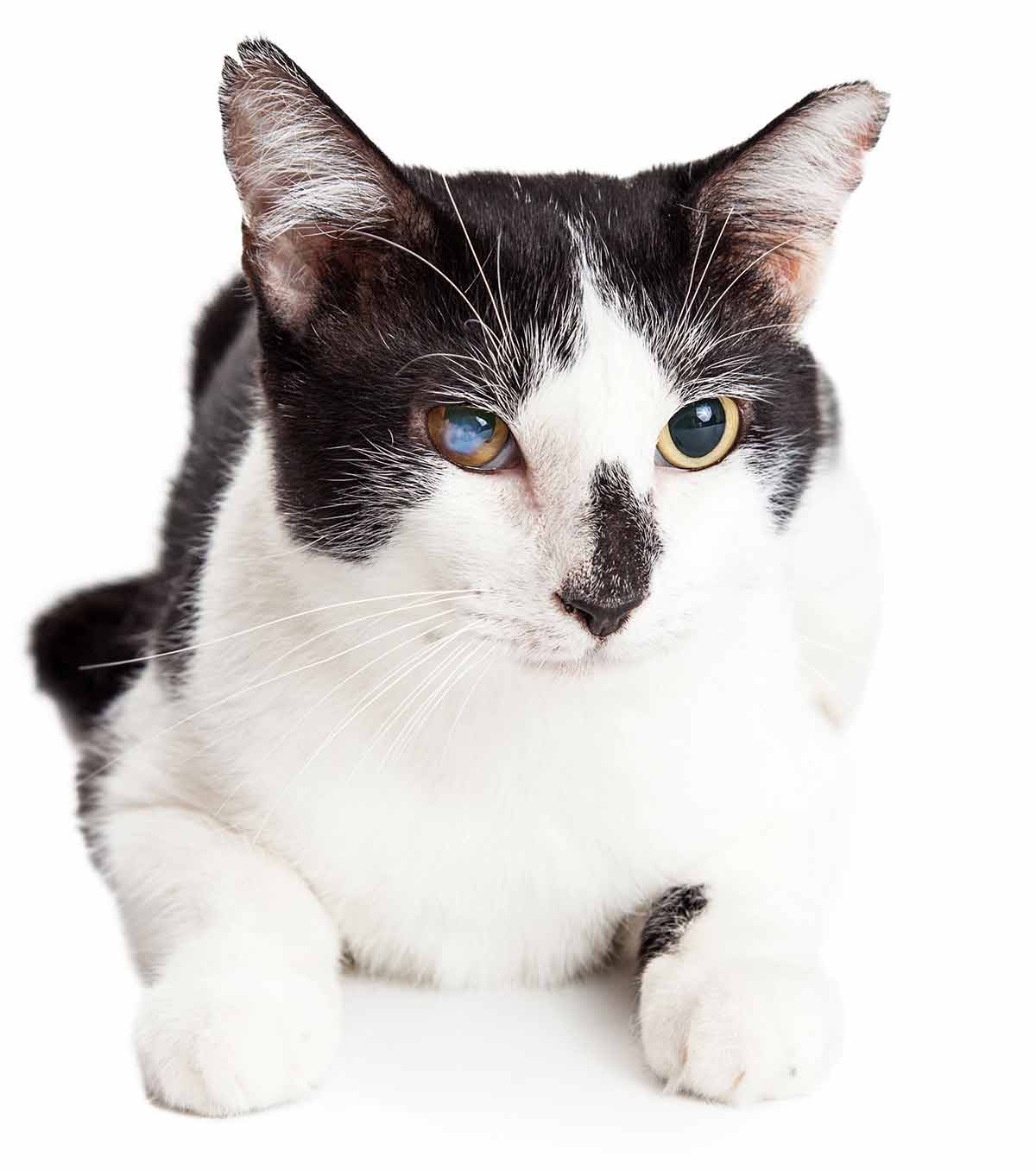 cataracts in cats