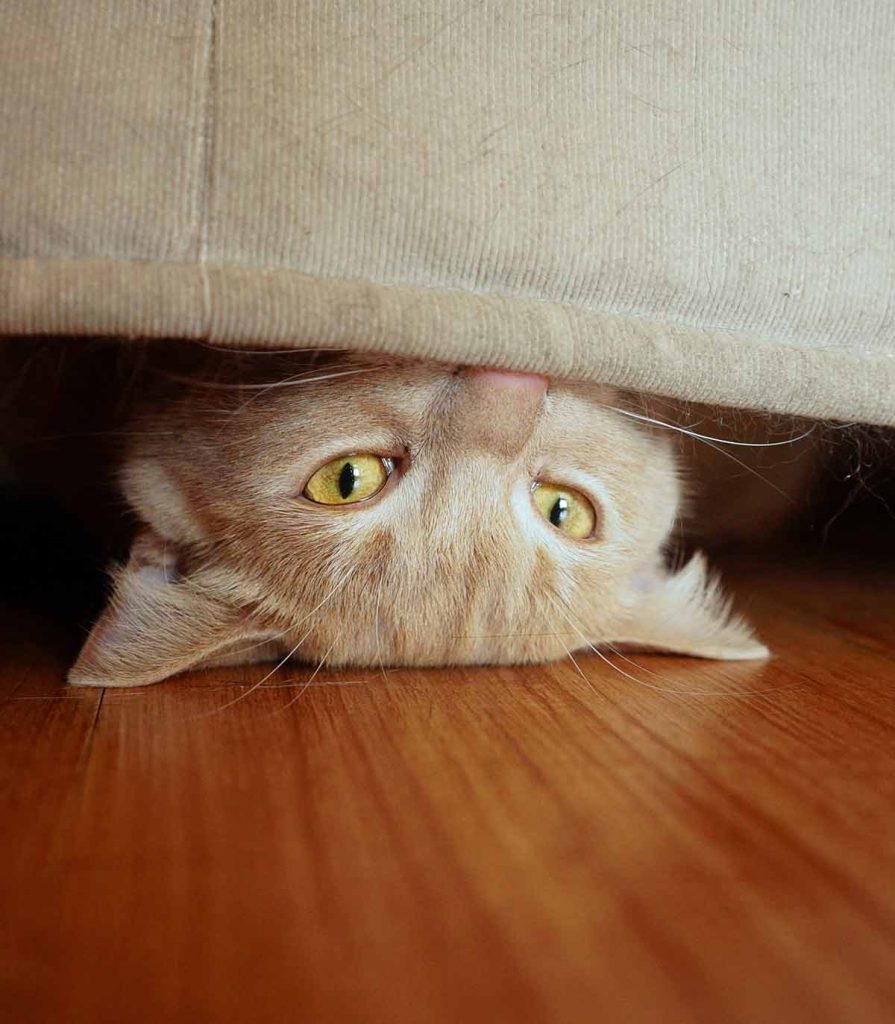 Are you investigating prozac for cats?