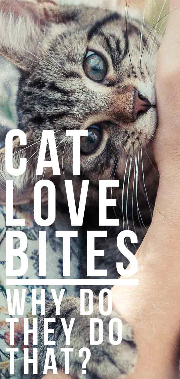 Cat Love Bites - Why Do They Do That?