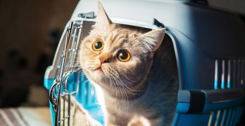 Best Cat Carriers – Secure And Comfortable Transport For Your Cat