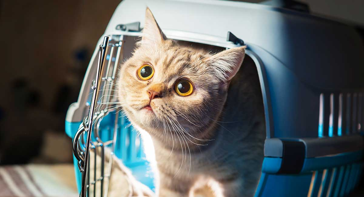 920d9701ea Best Cat Carriers - Secure And Comfortable Transport For Your Cat
