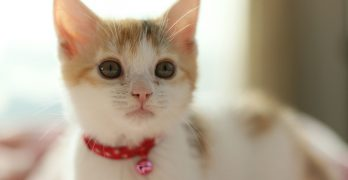 The Best Cat Collars – Keeping Your Cat Safe And Seen