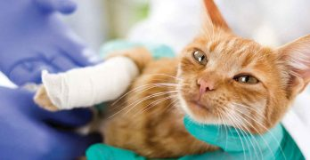 Your Injured Cat – Broken Leg Information and Advice