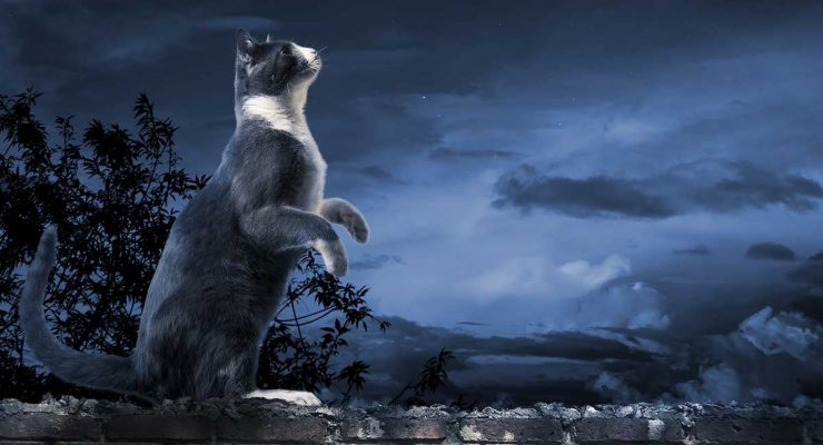 Why Is My Cat Meowing At Night? Reasons And Solutions For Night Time Crying