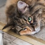 Why Is My Cat Not Eating? Appetite Loss In Cats