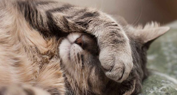 Cat Vomiting – Possible Causes And When To Call The Vet
