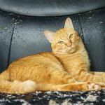 Declawing Cats – Alternatives To Surgery