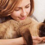 Friendliest Cat Breeds – The Best Pets For Happy Families