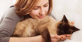 Friendliest Cat Breeds – The Best Pets For Happy Families
