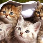 Kitten Facts – Fun Facts About Baby Cats