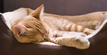 Your Sick Cat – A Guide To Common Cat Illnesses
