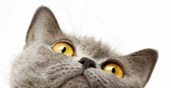 What Do Cats Need? Your Top 10 Kitty Essentials