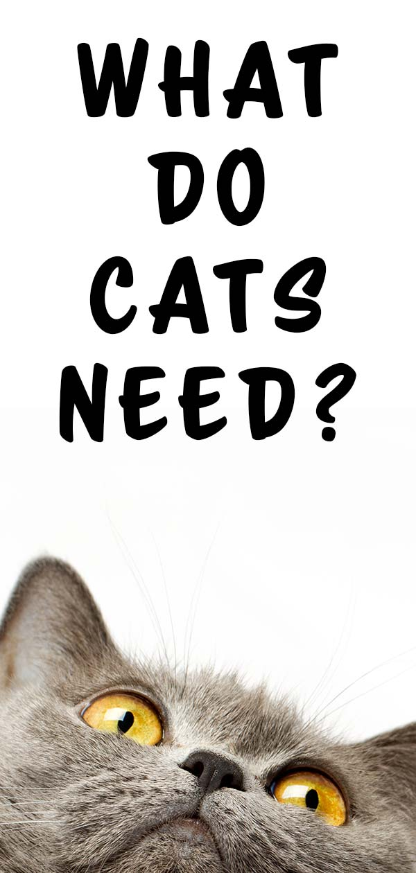 what do cats need