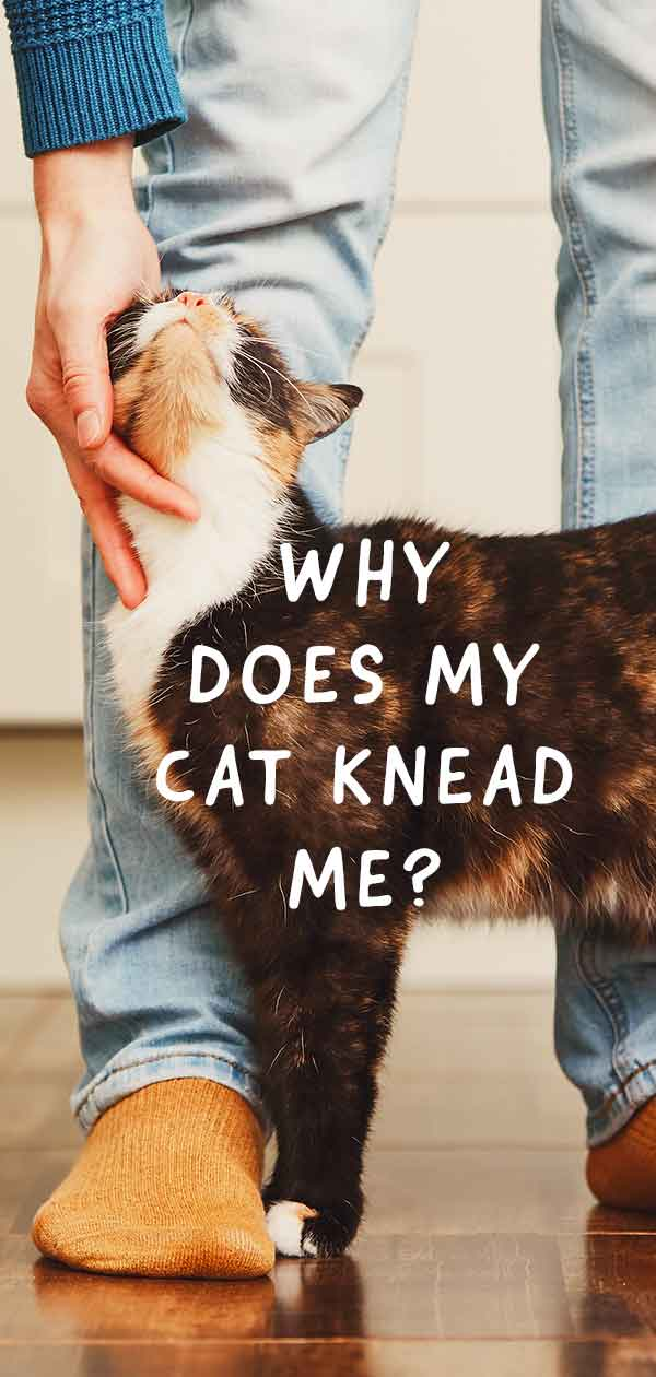 why does my cat knead me?