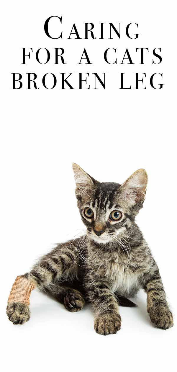 Caring for a cats broken leg.