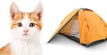 best cat tent
