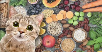 High Fiber Cat Food: Is It a Good Idea and Which Are the Best Brands?