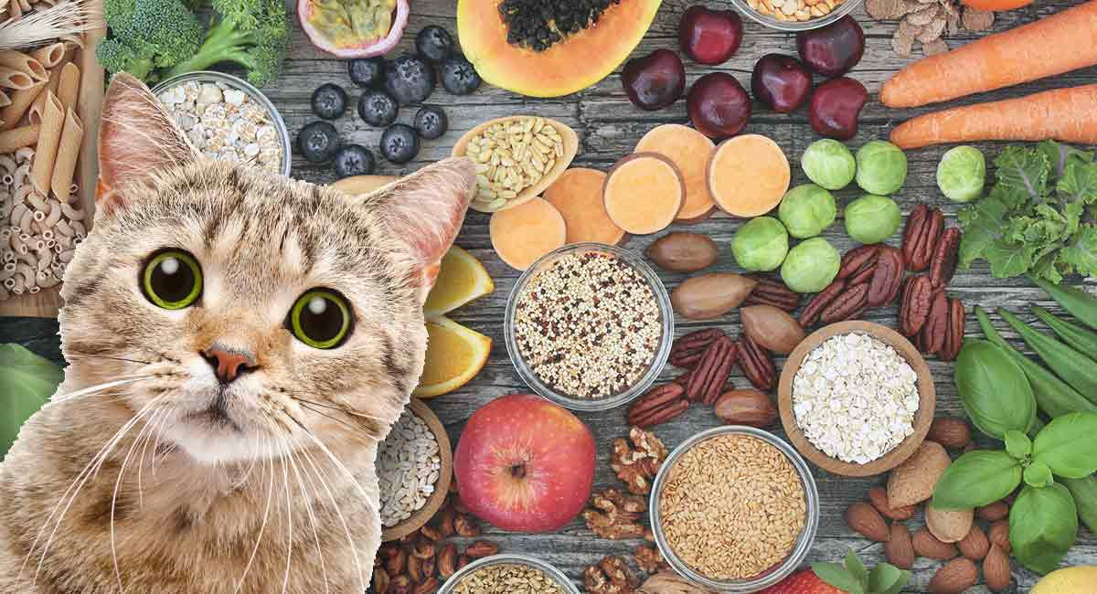 high fiber cat food