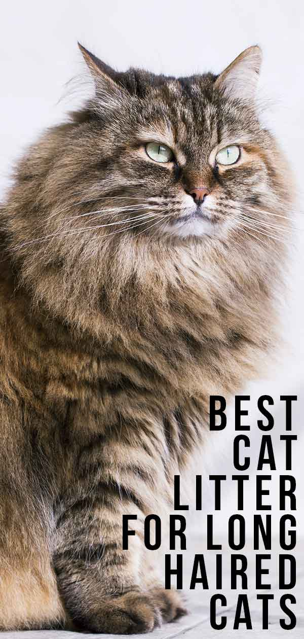Best Cat Litter For Long Haired Cats - Keeping Them Clean