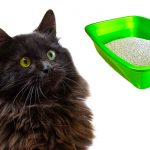 Best Cat Litter For Long Haired Cats – Keeping Them Clean Even When Their Tray Is Dirty