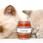 Best Catnip Brands and Varieties for Keeping Your Kitty Interested