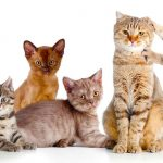 What Is A Group Of Cats Called? – The Social Solitary Animal