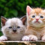 Cat Breed Quiz – Name That Cat!