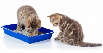 Best Cat Litter for Multiple Cats: Keeping a Busy Litter Box Fresh
