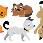 Cartoon Cat Names: Which Ones Do You Like the Sound Of?