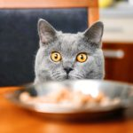 Best High Calorie Cat Food To Keep Your Pet Happy And Healthy