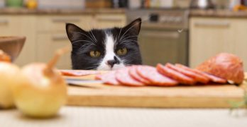 The Best Limited Ingredient Cat Food: Top Choices for Picky Pets