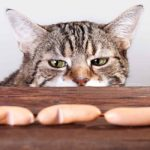 What Do Cats Eat? From the Wild to Modern Meals