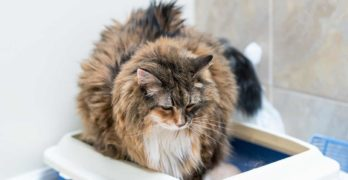 Best Litter Box For Large Cats – Top Choices