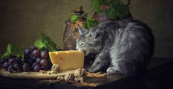 can cats eat cheese