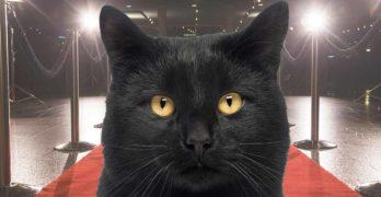 famous black cat names