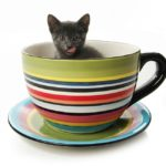 Teacup Cats And Miniature Cats – A Complete Guide