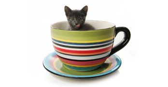 Teacup Cats And Miniature Cats - A Complete Guide