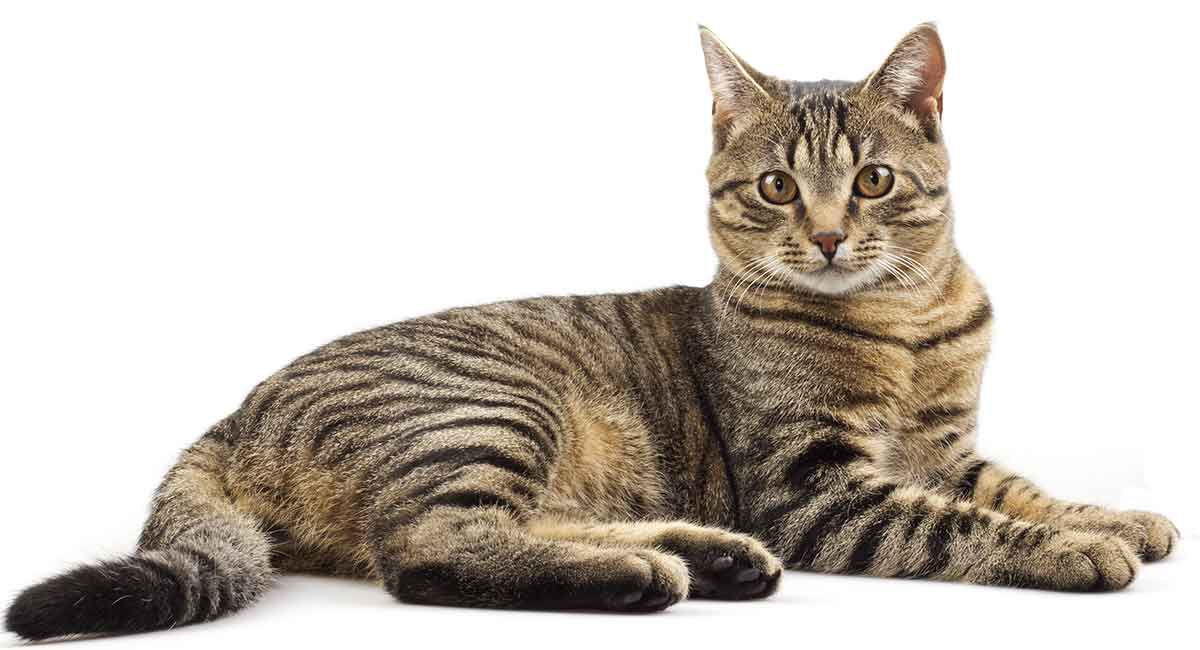 Tabby Cat Names - Inspiration And Ideas for Naming Your Tabby Kitty
