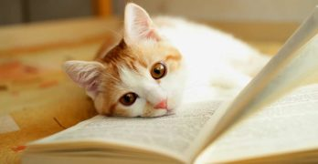 cat resting her head on a book