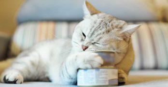 best canned kitten food