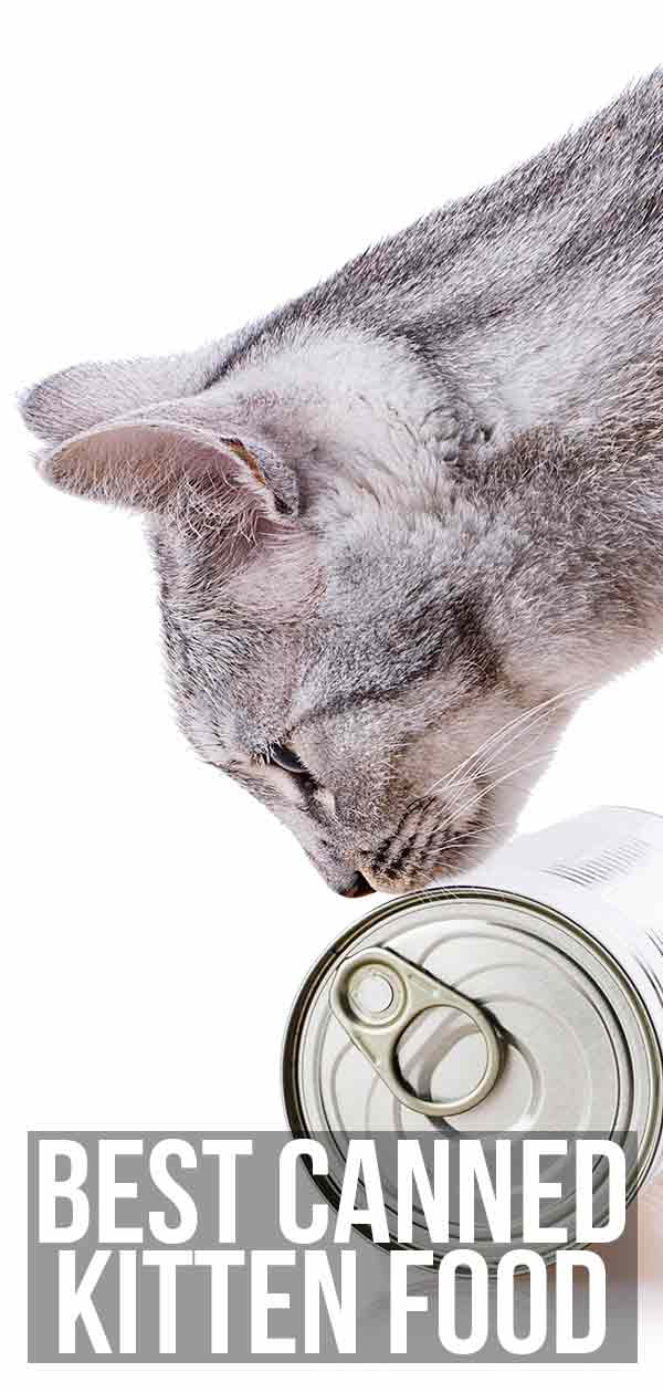 best canned kitten food