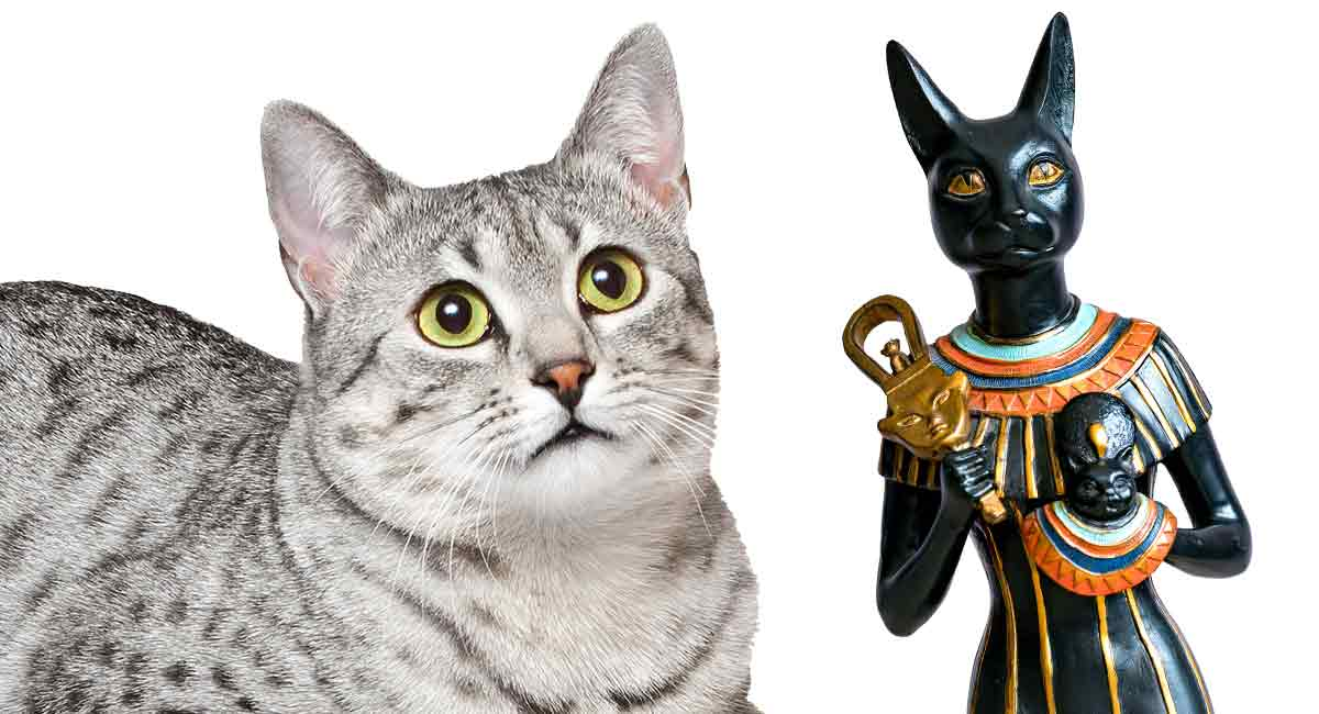 egyptian cat names