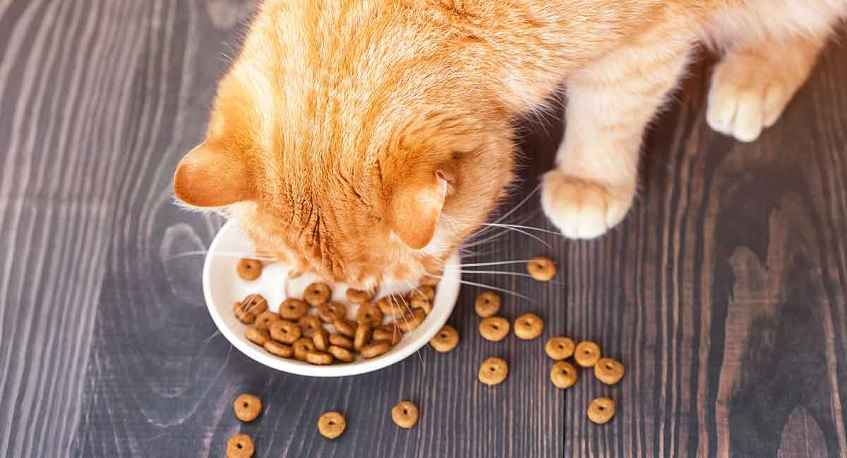 healthiest dry cat food