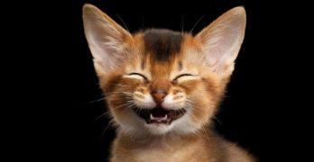 punny cat names