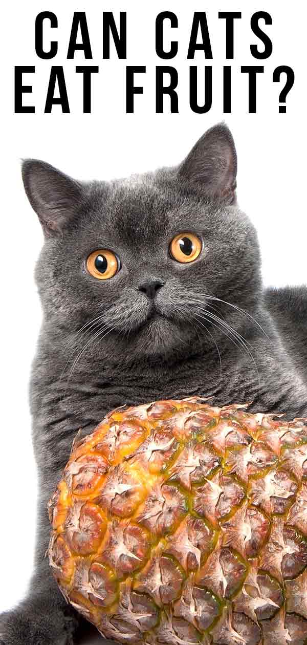 can cats eat fruit