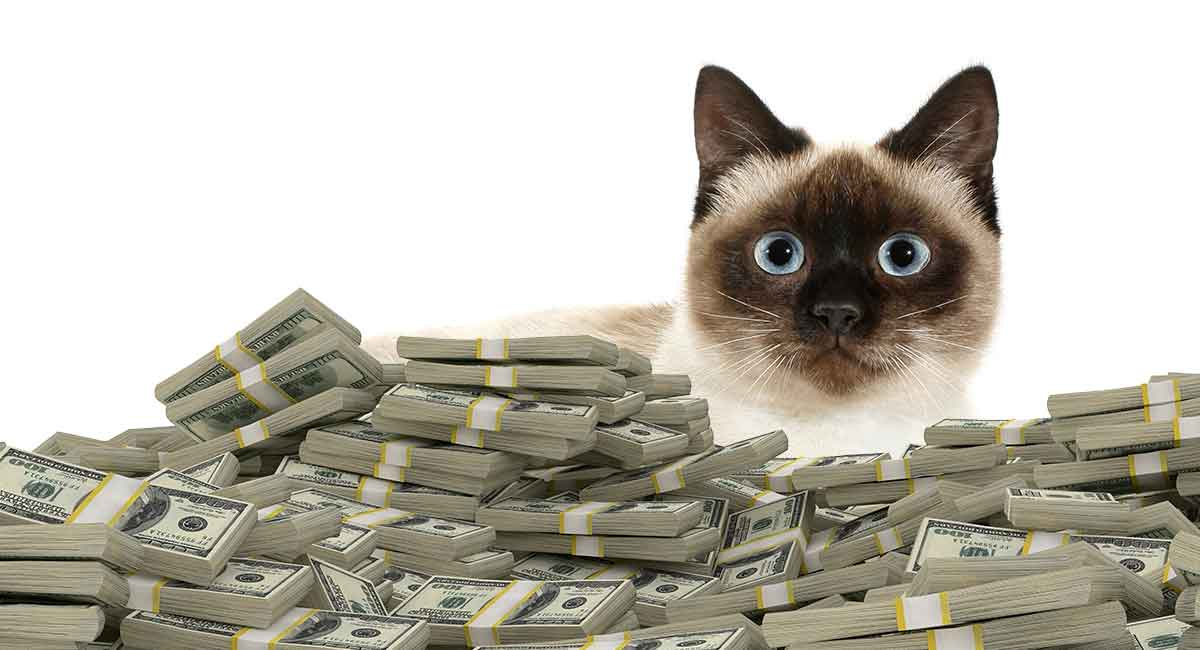 How much does a cat cost