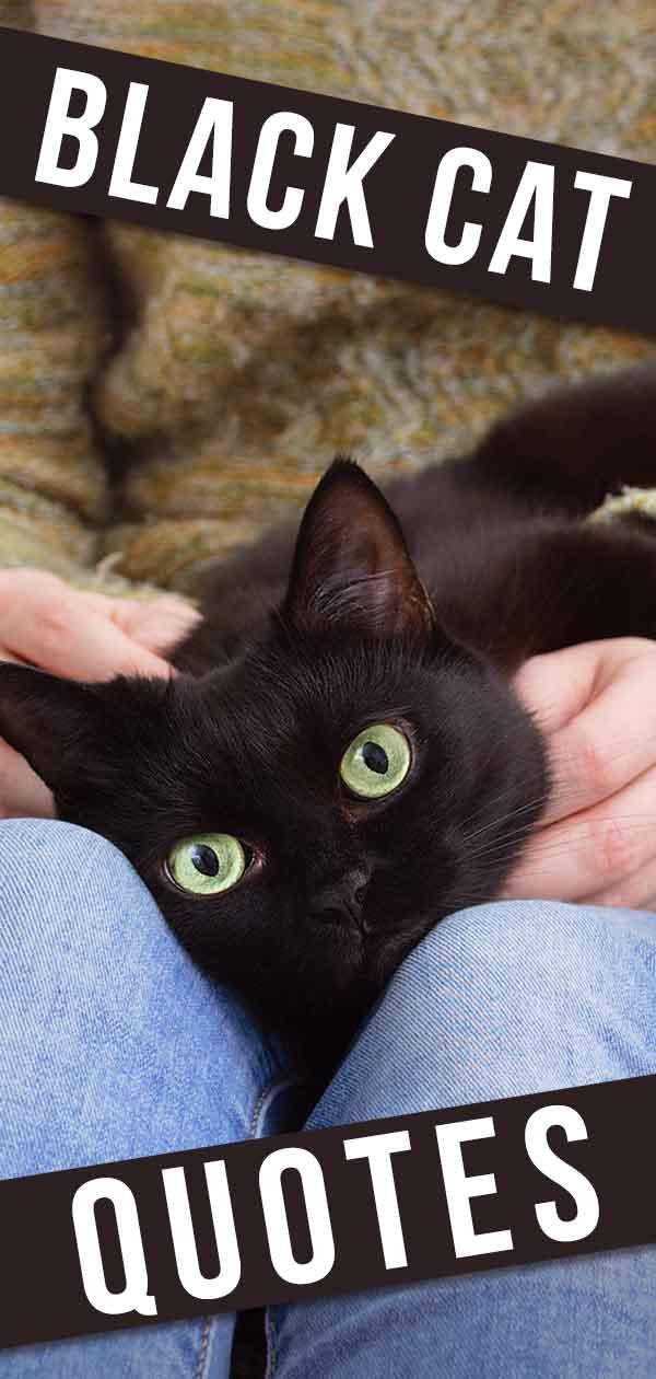 black cat quotes