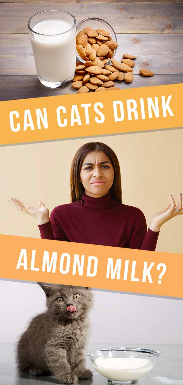 can cats drink almond milk