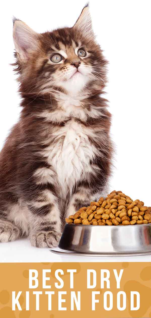 Best Dry Kitten Food - Discover The Best Dry Food For Kittens