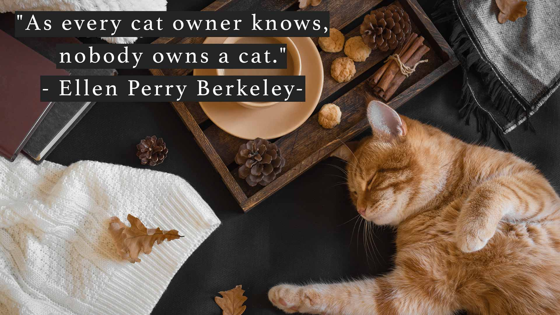 As every cat owner knows, nobody owns a cat